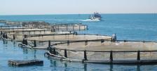 Рибовъдна ферма на тунизийското крайбрежие