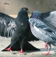 Домът на гълъбите